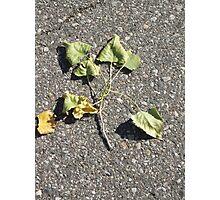 Brotherhood Of Leaves Photographic Print