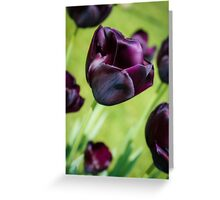 Queen of the Night Tulips Greeting Card