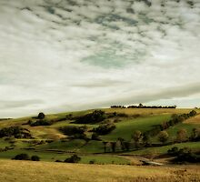 Dorrigo Panorama by Michael Bradley