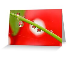 H20 Macro - Strawberry Drops Greeting Card