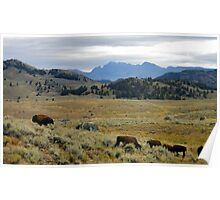 ~ The Landscape of Yellowstone National Park ~ Poster