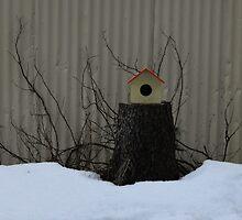 Icelandic Bird House by Anthony Sarow