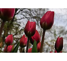 keukenhof gardens, the netherlands Photographic Print