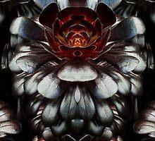 Aeonium by Yampimon