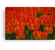 keukenhof gardens, the netherlands Canvas Print