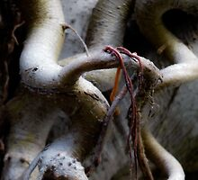 Creatures lurking in roots around tree trunk. by ronsphotos