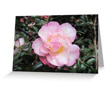 Camellia Sasanqua paradise 'Gillian' Greeting Card