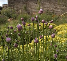 CHIVES AND MARJORAM - SECRET WALLED HERB GARDEN by paulasphotos101