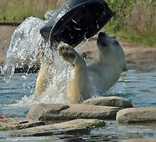 Playing polarbear by MaartenMR