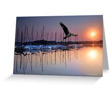 Sailboats Osprey Sunrise Greeting Card