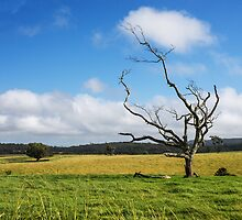 Evelyn, Queensland, Australia by Allport Photography