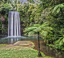 Millaa Millaa, Queensland, Australia. by Allport Photography