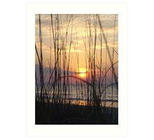 Beach Sunrise Through the Dune Grass  Art Print