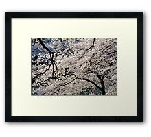 Cherry Blossoms in Tokyo Framed Print