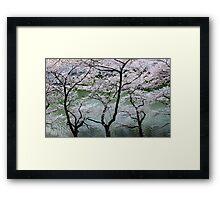 Cherry Blossoms in Japan Framed Print