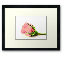 Rose with water drop Framed Print