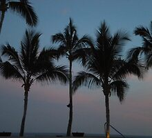 Sunset Palms V by acarpen