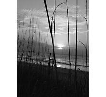 Sea Grass I BW Photographic Print
