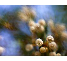 Bella Blooms Photographic Print
