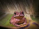 Toad by jimmy hoffman