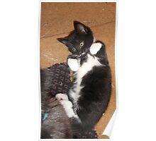 Kitten -(080613)- Digital photo/Fujifilm FinePix AX350 Poster
