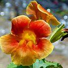 1583-orang flowers by elvira1