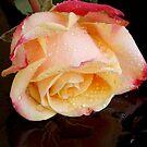 1587-beauty flowers by elvira1