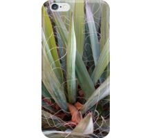 decorations of nature  iPhone Case/Skin