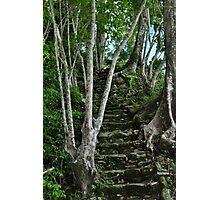 Forgotten Path Photographic Print