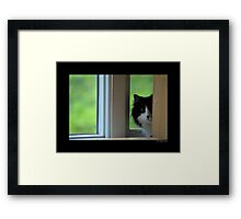 Felis Catus - Maine Coon Cat Hiding From Vacuum Sound  Framed Print