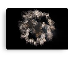 Maltese Fireworks Canvas Print