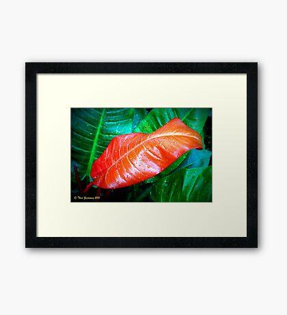 Leaf in Lomo Framed Print