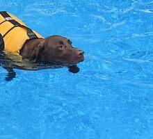 Swimming Dog by bethscherm