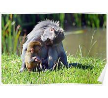 Wildlife 7 Poster