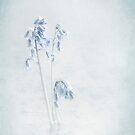 Blue Tender by Gouzelka