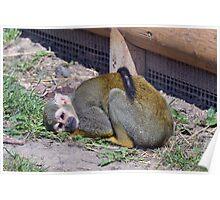 Wildlife 9 Poster