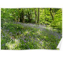 Bluebell Woods. Poster