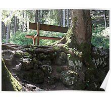 panchina nel bosco Poster