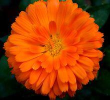 Orange Spray by Clayton Bruster