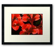 Euphoria of Euphorbia Framed Print