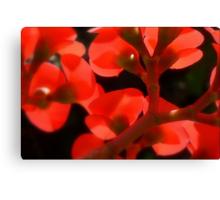 Euphoria of Euphorbia Canvas Print