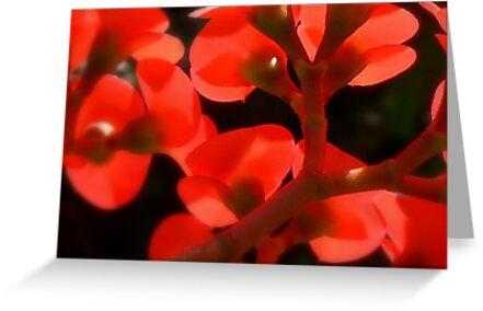 Euphoria of Euphorbia by paintingsheep