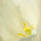 Lily by Diane Schuster