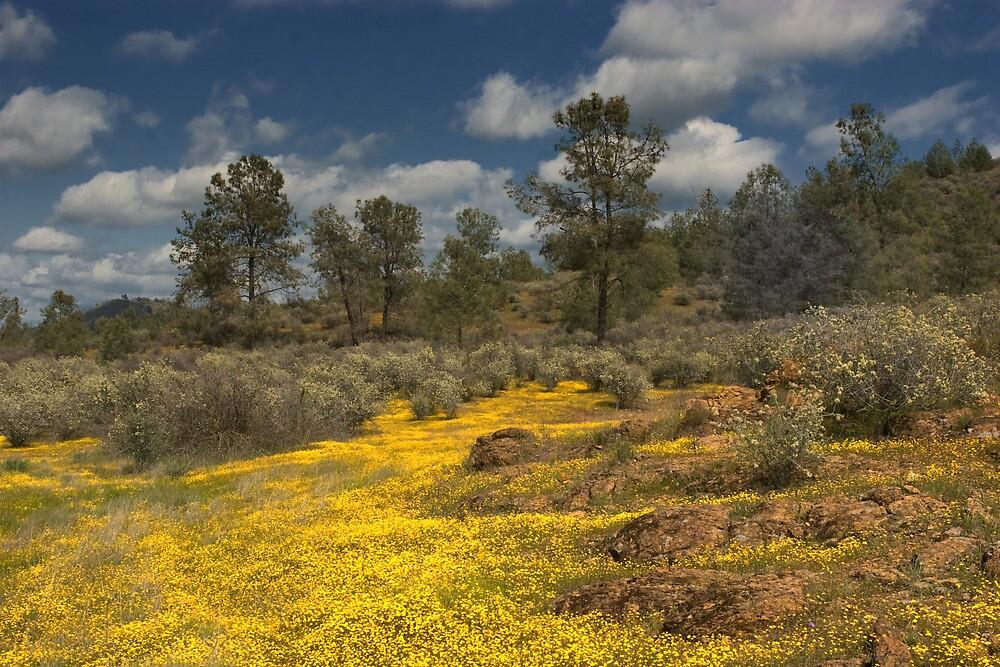 Spring Wildflower Display by Floyd Hopper