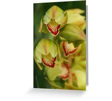 Yellow Cymbidium Orchids Greeting Card