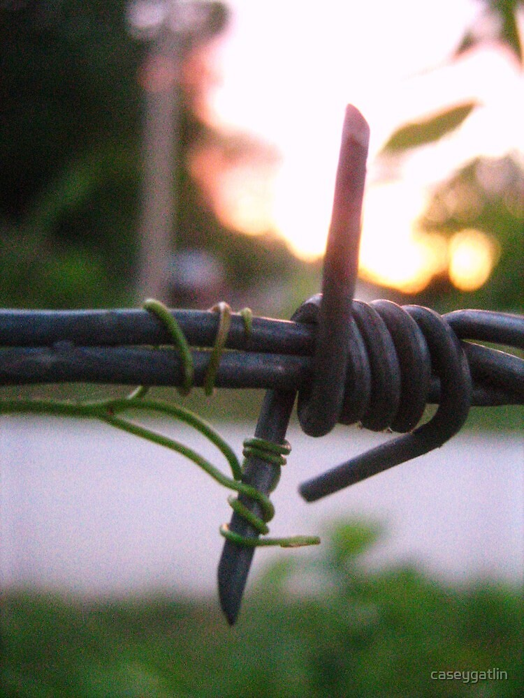 Barbed Wire &Vine At Sundown by caseygatlin