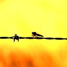 Barb-Wire Bugs Me by Michelle Munday