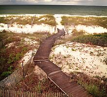 Cape San Blas Dunes by Philip Allgeier