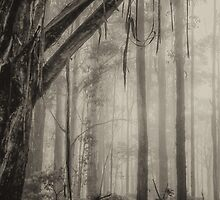 Mist - Laurel Hill NSW Australia (B&W)- The HDR Experience by Philip Johnson
