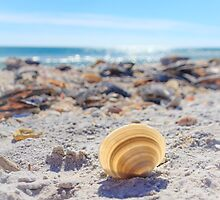 Cockle Shell Sunshine by Silken Photography